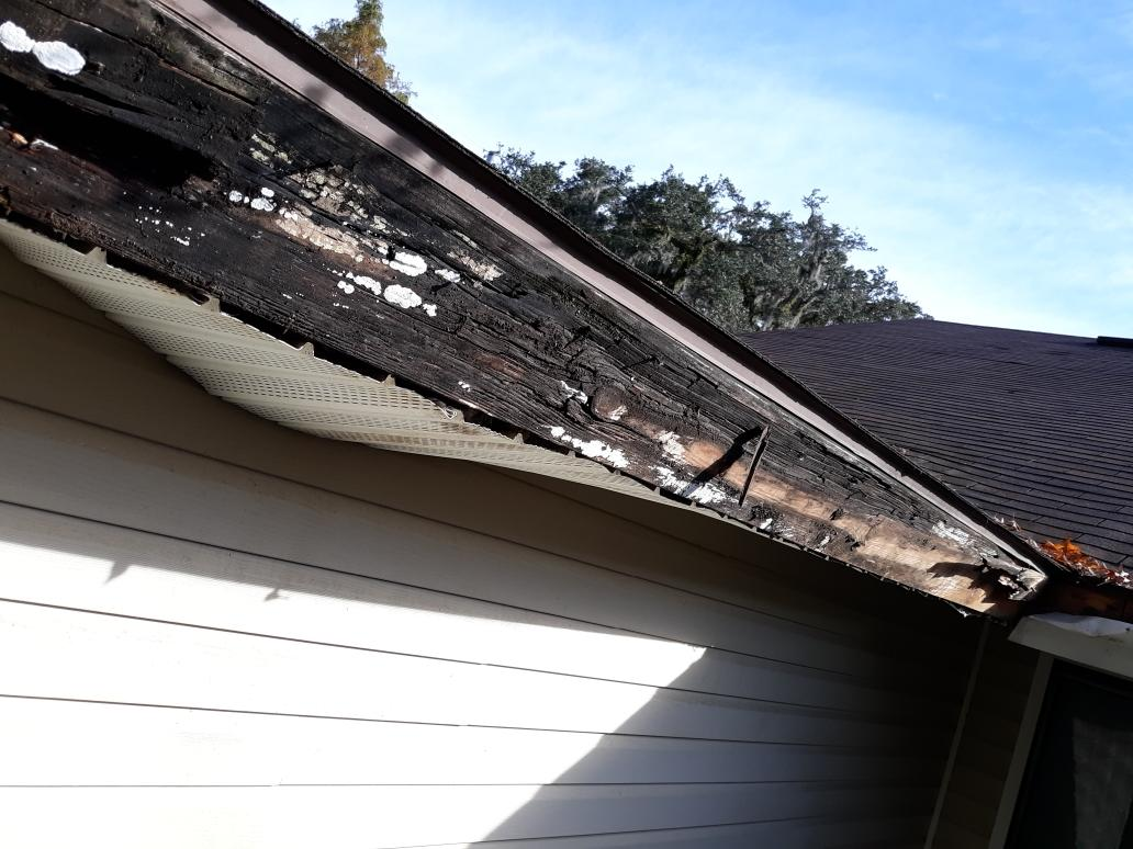 Rotted sub fascia board from lack of proper gutters and gutter guards.